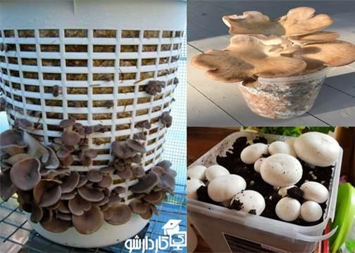 پرورش قارچ در گلدان