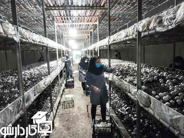 پرورش قارچ صنعتی